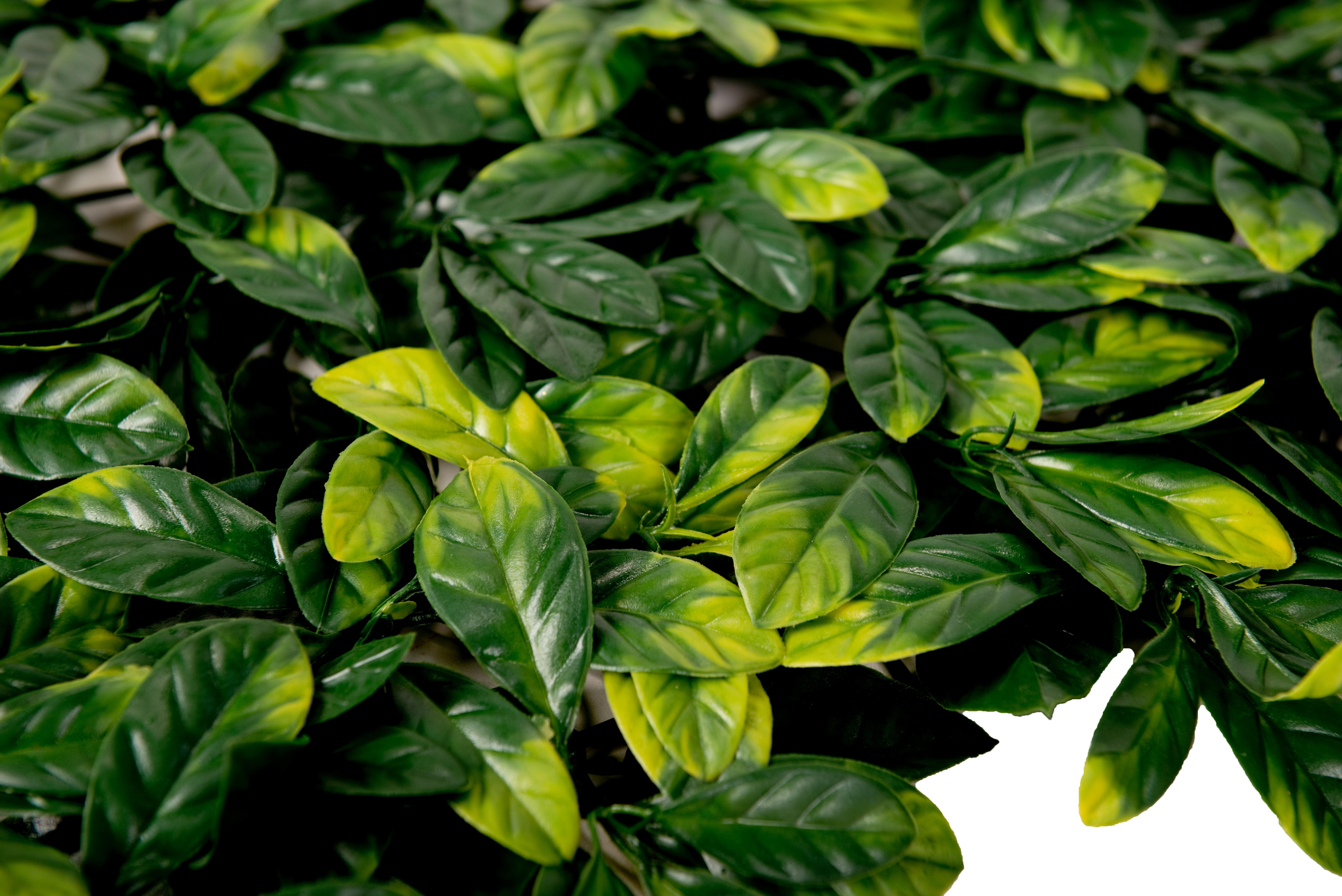 Sztuczny żywopłot  ligustr gwarantuje soczysta zieleń przez cały rok.