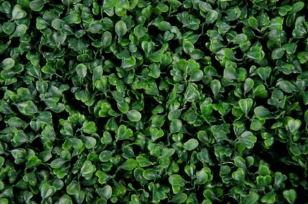 Sztuczny żywopłot bukszpan o intensywnie zielonej barwie będzie stanowić idealną osłonę balustrady, płotu czy ściany.