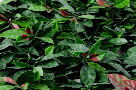 Sztuczny żywopłot Liście w pięknych odcieniach zieleni z czerwonymi akcentami stanowi doskonałą i szybką osłonę płotu, balkonu, altany.